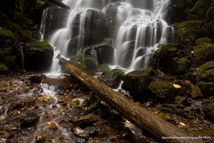 Fairies (Dan Sherman) Tags: autumn fall water oregon dark waterfall moss pacificnorthwest columbiarivergorge