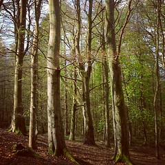 the woods (scott.dougall) Tags: trees climb woods place memories special nostalgia 1980s boyhood 52weeks 0182012