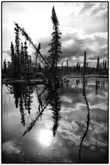 Sunday Afternoon (Wolfhorn) Tags: trees nature water alaska clouds blackwhite wilderness sundayafternoon