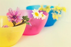colors (ana.gr.) Tags: blue flower ikea flor bowl colores margarita silvestre manzanilla malva camomile
