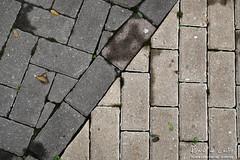 yin yang miksang pb? (Ricardo Castro) Tags: contraste yinyang miksang calada ladrilhos