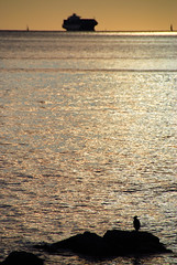 Trieste - A Cormorant's Eye View of the Gulf of Trieste (antonychammond) Tags: sea empire cormorant tanker trieste adriaticsea austrohungarian thegalaxy habsburgmonarchy bellitalia naturessilhouettes gulfoftrieste mygearandme friuliveneziagiuliaandtriesteprovince