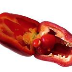 Pregnant Pepper