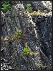 cliff face (rowanlea51) Tags: