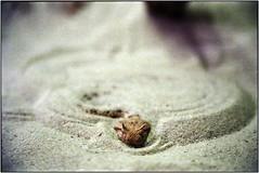 `   (Ulla M.) Tags: analog dof bokeh snake grain schlange expiredfilm freihand 24x36 tamron2875mmf28 nikonf801s terrazoo kleinbild canoscan8800f