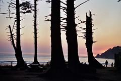 Oregon 8A_0067 (alyssa's gallery) Tags: oregon oregoncoast oswaldwest shortsands