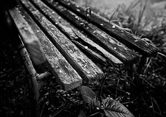 (MT...) Tags: blackandwhite bw monochrome japan bench bokeh lakeside  2012    midmay  akitaprefecture  laketazawa 2012  apieceofcherryblossom