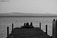 Albufera 5 - amor (Enrique Gandia) Tags: españa lake love water valencia canon boats lago muelle duck spain agua amor pato embarcadero puestadesol barcas arroz albufera canonistas