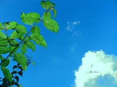 Final de tarde (Alan Bailão ⎝⏠⏝⏠⎠) Tags: azul brasil natureza céu goiânia goiás flôres singela
