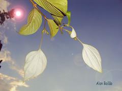 Final de tarde (Alan Bailão ⎝⏠⏝⏠⎠) Tags: azul brasil natureza céu goiânia goiás flôres singela soulocreativity1