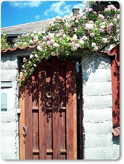 Gate with flowers on my road-virgos kapu Budapesten (Katalin Rz) Tags: soe flickraward concordians thebestofday gnneniyisi thelargestgroupintheworld