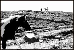 Man vs Horse (AB Chatterjee (ABC)) Tags: landscape manali rohtangpass hadimbatemple