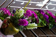 (mahsa saffaripour) Tags: plant flower seen hyacinth norooz norouz nowruz noruz nouruz noroz haft sonbol narooz