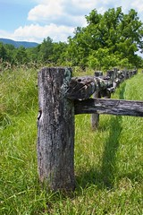 Fence at Caldwell Fields (repete7) Tags: fence geotagged virginia jeffersonnationalforest caldwellfields tamron18270 canont1i