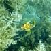 Colombia Wildlife Underwater