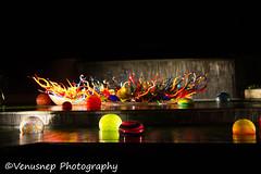 Chihuly Exhibit 49 (venusnep) Tags: longexposure atlanta flower chihuly glass ga garden georgia botanical nikon long exposure may exhibit atlantabotanicalgarden sculptures chihulyexhibit atlantaga 2016 glasssculptures d610 nikond610