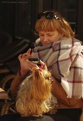 Portrait (Natali Antonovich) Tags: portrait dog animal seaside lifestyle relaxation oostende seashore seasideresort belgiancoast seaboard