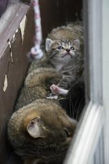 20160429_PhotographyPractice_0051_4x6 (Creativeleigh Shot...by LeighAnneD) Tags: cats cat feline outdoor kittens neighborhood litter felines
