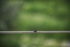 Funambulist 118-366 (a_Valentine) Tags: green nature animal bug insect alone loneliness balcony balance conceptual viewer invertebrates equilibrium naturephotography loveanimals funambulist 365days 365daysproject 365project insectphotography insectbug rckenfigur alonelonely avalentine valentinastocchetti