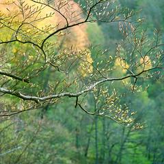 Bonsai - Fuji 160NS (magnus.joensson) Tags: park green zeiss skne spring fuji sweden swedish hasselblad national pro cf 500cm sonnar c41 sdersen 250mm 160ns