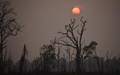 Angkor, Cambodia (james.mason01) Tags: travel sunset sun tree asia cambodia explore angkor