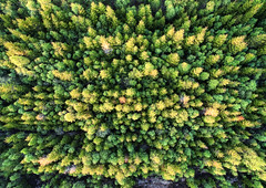 2405052016 (2c..) Tags: trees ireland summer 3 abstract green forest low lands bog res 2c kildare dji
