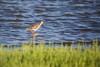 Small Bird in Kalochori (pap-x) Tags: sea bird canon wildlife small greece tele 550d kalochori