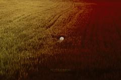 Dos tierras (PetterZenrod) Tags: red color colour art grass yellow canon photography rojo arte 85mm diego explore amarillo f18 650d