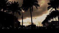 Palms stop saying at sunset (Amr Tawwab) Tags: life street sunset bw sun white plant black tree eye nature lamp monochrome mobile sunrise work dark fire photography mine alone breath over egypt samsung style sunny palm mob cairo lonely splendid eg sebian mobilgraphy tawwab