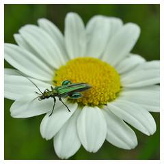 preflight checks finished (e27182818284) Tags: insect schwarzwald blackforest smcpk35mmf20