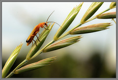 Beetle grass (Erik v Hassel) Tags: ngc haps erikhaps nikon d5100 nederland holland dutch beautiful fraai excellent flickr view splendid beauty best wonderful fantastic awesome stunning incredible magic nice perfect photo image shot foto lovely