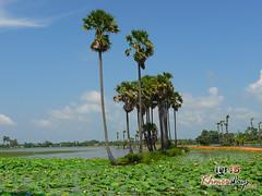 Landscape - Preah Vihear.jpg