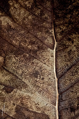 Abstract (    , ) Tags: brown abstract tree nature lines canon paper d details line 600 qatar t3i  d600 qtr     600d ameera    q6r   amoora