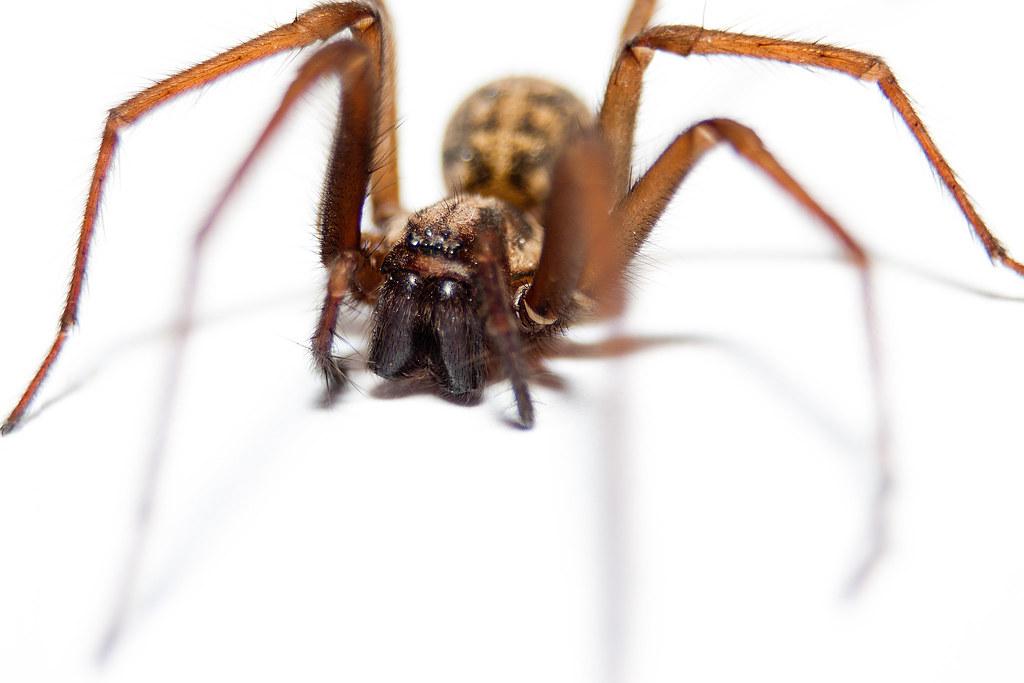 Arachnophobia-2.jpg