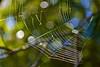 The natural world (Deb Jones1) Tags: macro nature beauty canon outdoors bokeh spiderweb australia flickrduel debjones1