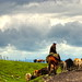 Shepherd In Tangbula Grassland (HDR)