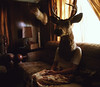 (Kyle.Thompson) Tags: portrait orange brown house abandoned girl sitting head deer couch 365