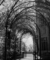 Arbor Path (scilit) Tags: castle monochrome stone architecture garden vines gate path gothic structure historic arbor through pathway sincity casaloma flickraward sailsevenseas sincityexcellence