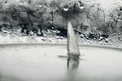 Sereno II / Serene II (araujovisual) Tags: bw white blanco ice water agua minimal serene hielo sereno monotono araujovisual paisajeíntimo