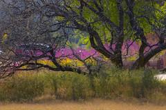 The Sedona Spring Collection:  Layers (dbpeterson723) Tags: sedona wildflower sedonaspring