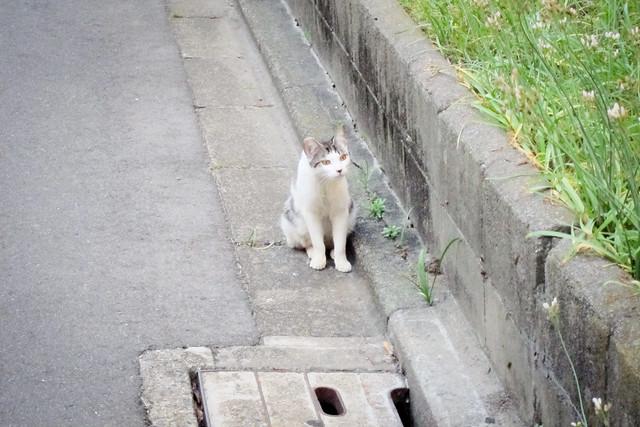 Today's Cat@2012-05-23