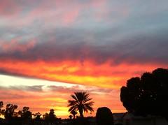 Arizona (EagleRush44) Tags: coyote sunset cactus palmtrees