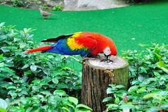 Macaw (<<Sam>>) Tags: bird macaw
