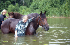 Uintireissu (smerikal) Tags: horse lake swimming swim hevonen jrvi standardbred uinti lmminverinen shinyvicks