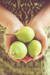 168 | 366 (EsotericMaiden) Tags: green girl fruit canon 50mm hands sweet bokeh country fresh 365 homegrown fruittree freshfruit day168 summerfruit 366 summerpear 365project 366project 168366