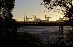 Twilight Portrait (Padmacara) Tags: bridge tree port river twilight australia cranes framing fremantle harvour d610