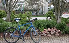 Hitting the bricks (D70) Tags: canada bike bicycle garden cherry bc dr bricks blossoms vehicles gloves dew rack burnaby neighbourhood kona hitting 2013