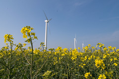 wind (xfoTOkex) Tags: flowers windmill germany nikon wind windmills balticsea rape ostsee d800 conola