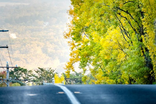 Mt Macedon Autumn Colours -27
