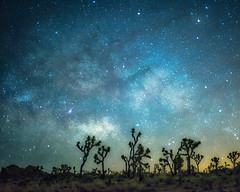 Night Dreams (MarcCooper_1950) Tags: park longexposure blue trees sky color night stars landscape outdoors desert joshuatree dramatic vivid southern nightsky milkyway marccoopernikond810hdrrawlightroommarc coopercaliforniamojavenational